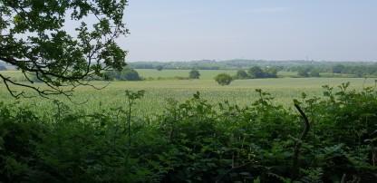 Looking towards Malden Rushett